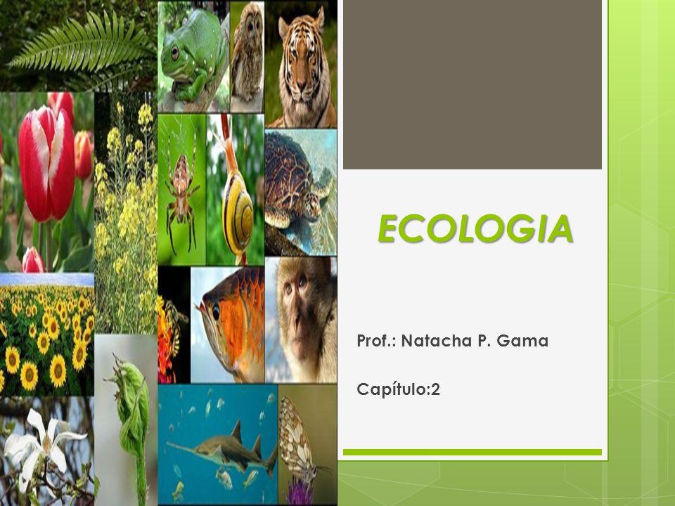 Prof.: Natacha P. Gama Capítulo:2