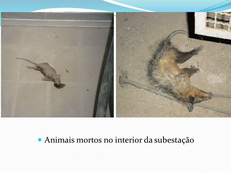 Animais mortos no interior da subestação