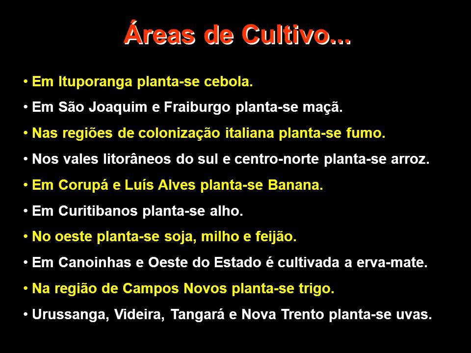 Áreas de Cultivo... Em Ituporanga planta-se cebola.