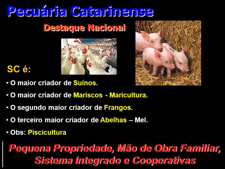 Pecuária Catarinense Destaque Nacional. SC é: O maior criador de Suínos. O maior criador de Mariscos - Maricultura.