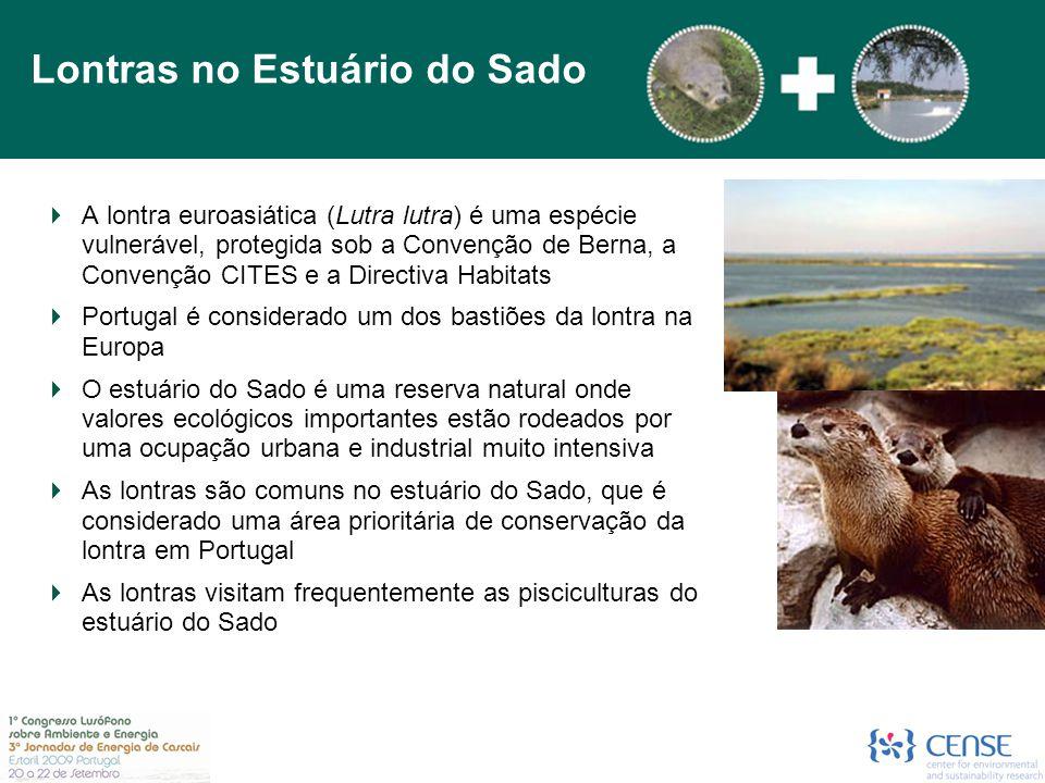 Lontras no Estuário do Sado
