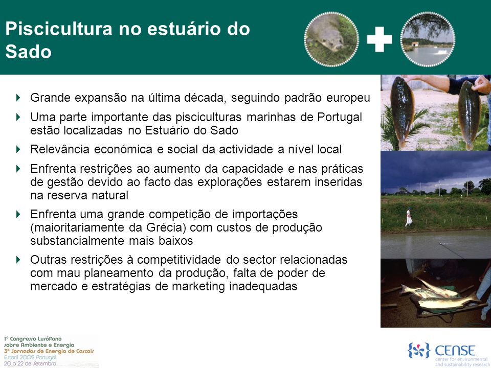 Piscicultura no estuário do Sado