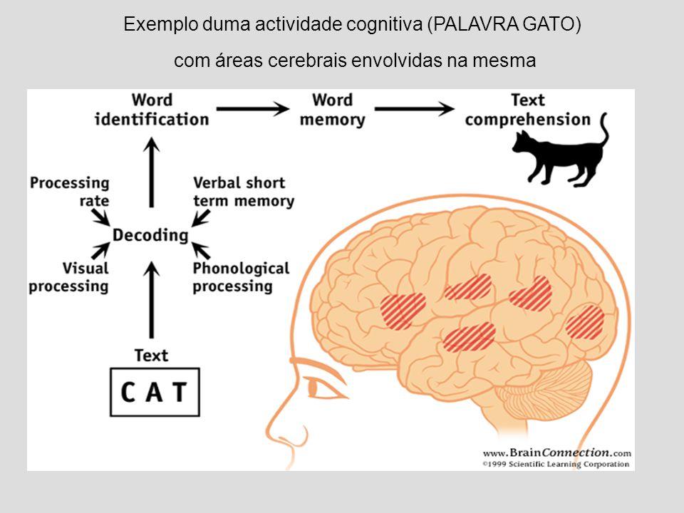 Exemplo duma actividade cognitiva (PALAVRA GATO)