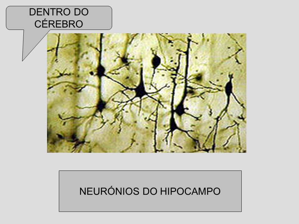 NEURÓNIOS DO HIPOCAMPO