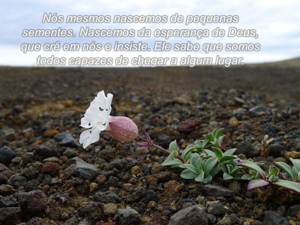 Nós mesmos nascemos de pequenas sementes