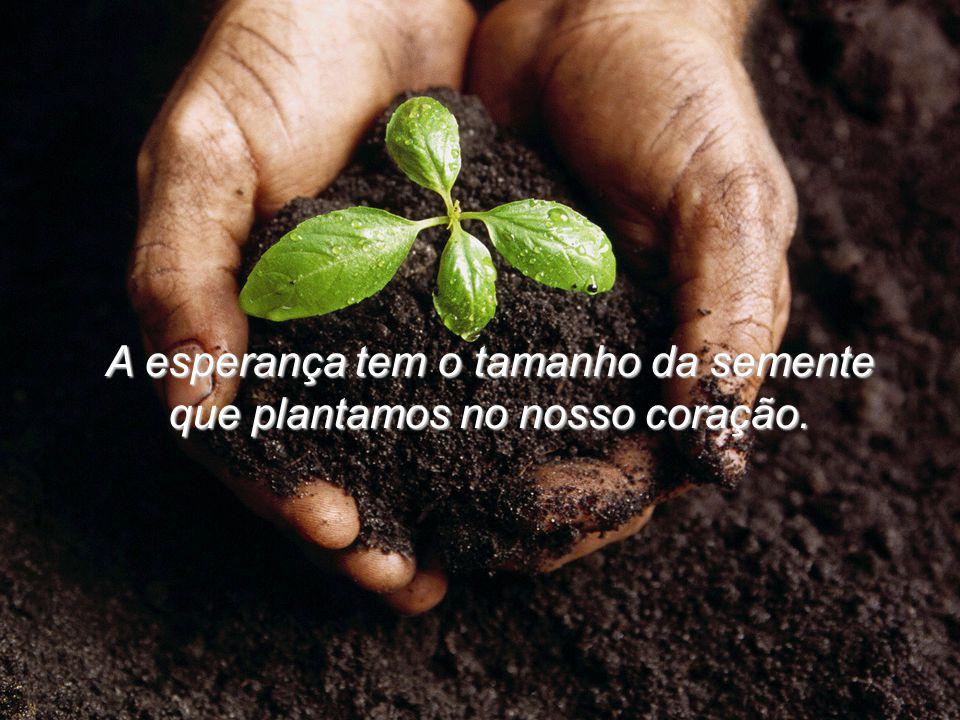 A esperança tem o tamanho da semente que plantamos no nosso coração.