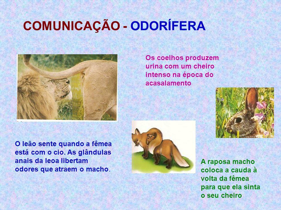 COMUNICAÇÃO - ODORÍFERA