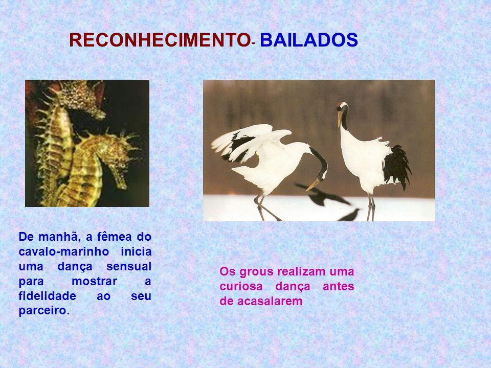 RECONHECIMENTO- BAILADOS