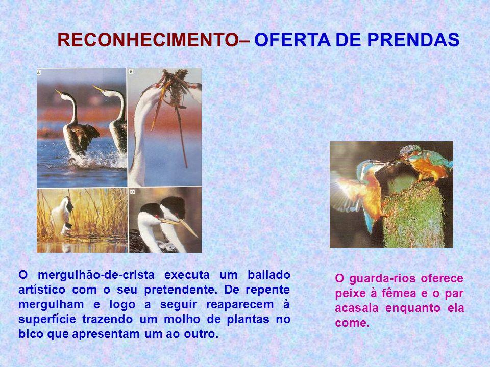RECONHECIMENTO– OFERTA DE PRENDAS