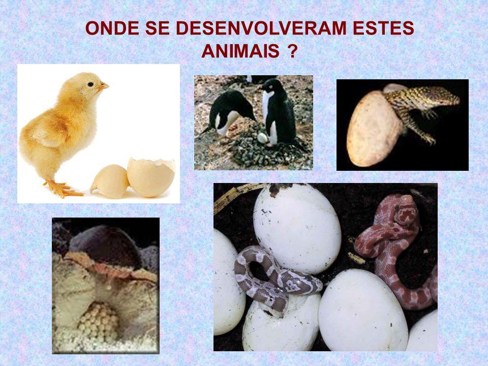 ONDE SE DESENVOLVERAM ESTES ANIMAIS