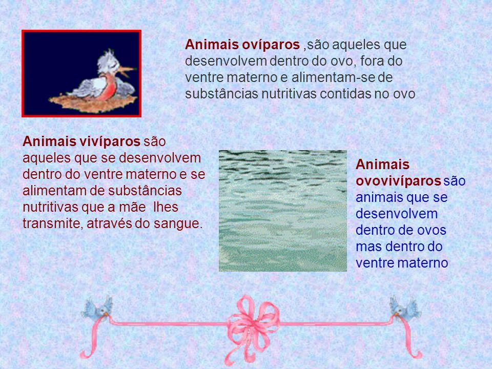 Animais ovíparos ,são aqueles que desenvolvem dentro do ovo, fora do ventre materno e alimentam-se de substâncias nutritivas contidas no ovo