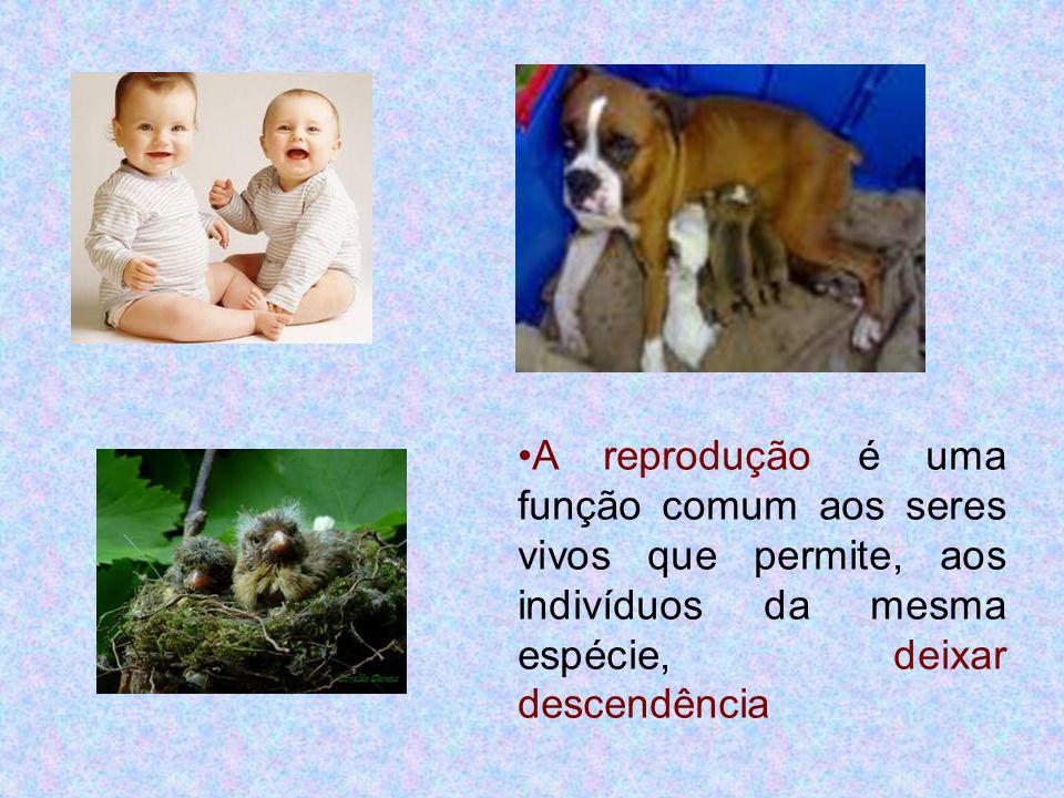 A reprodução é uma função comum aos seres vivos que permite, aos indivíduos da mesma espécie, deixar descendência