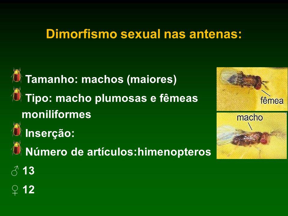 Dimorfismo sexual nas antenas: