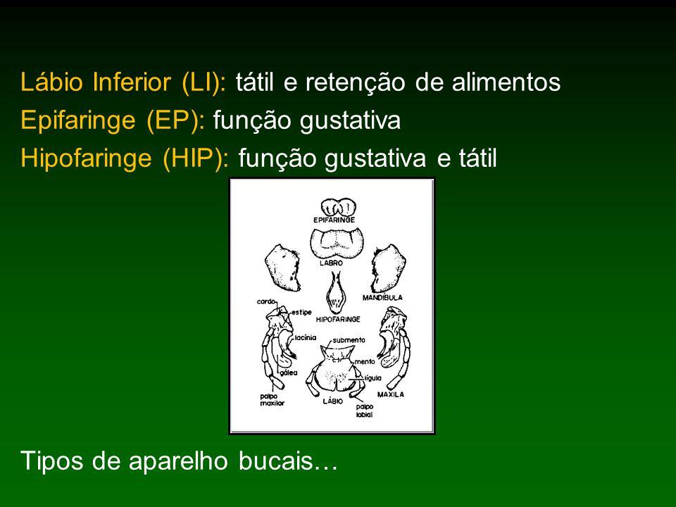 Lábio Inferior (LI): tátil e retenção de alimentos
