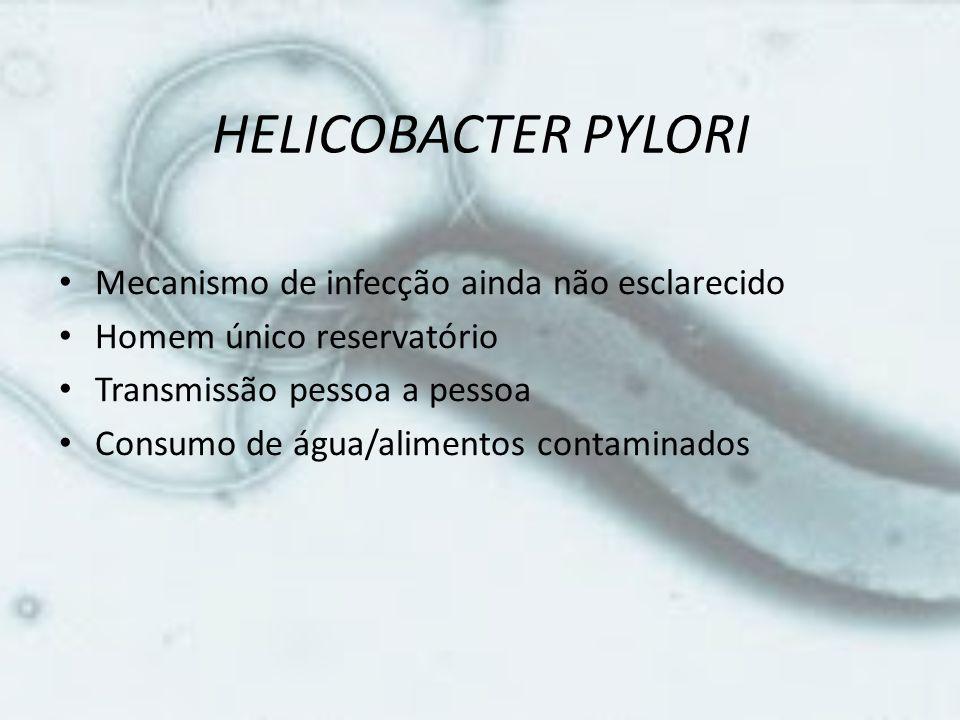 HELICOBACTER PYLORI Mecanismo de infecção ainda não esclarecido