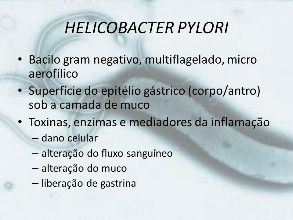 HELICOBACTER PYLORI Bacilo gram negativo, multiflagelado, micro aerofílico. Superfície do epitélio gástrico (corpo/antro) sob a camada de muco.