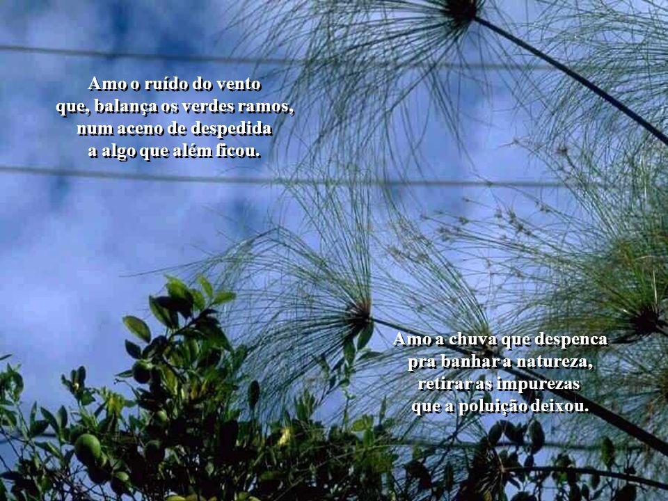 que, balança os verdes ramos, Amo a chuva que despenca