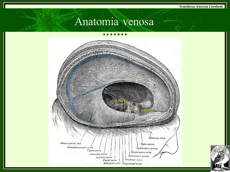 Anatomia venosa
