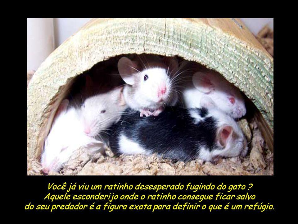 Você já viu um ratinho desesperado fugindo do gato