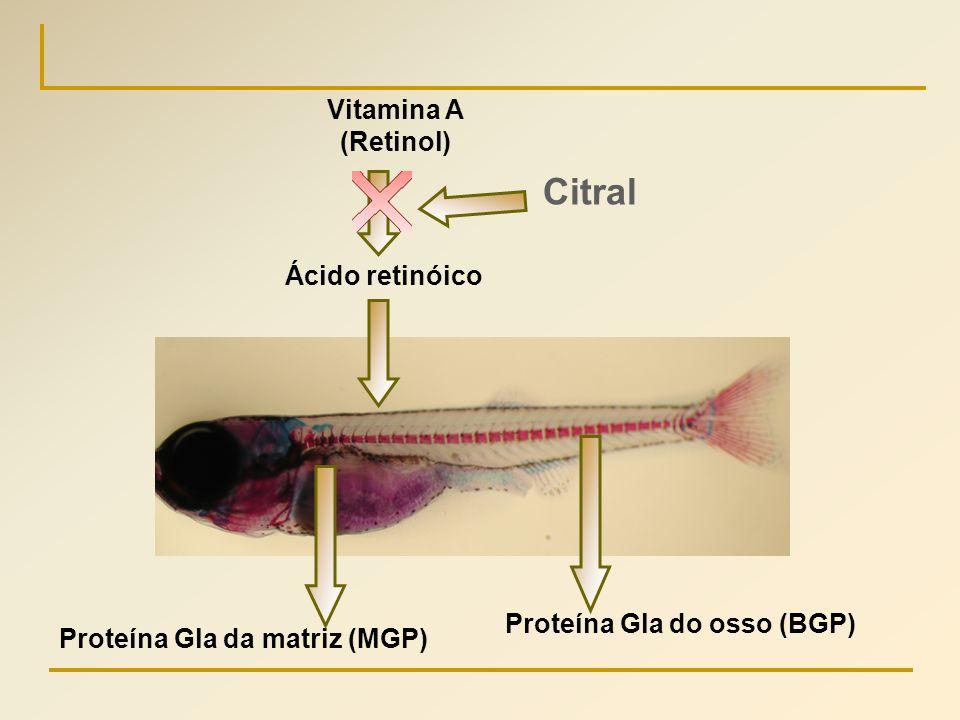 Citral Vitamina A (Retinol) Ácido retinóico Proteína Gla do osso (BGP)