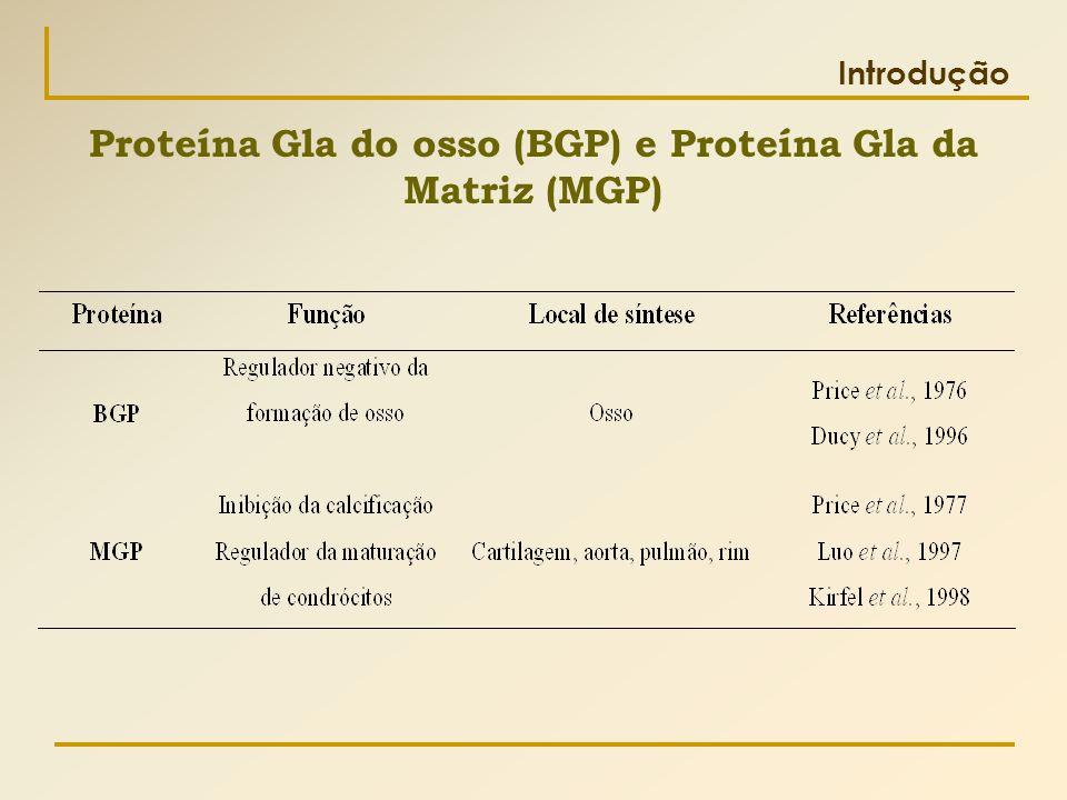 Proteína Gla do osso (BGP) e Proteína Gla da Matriz (MGP)