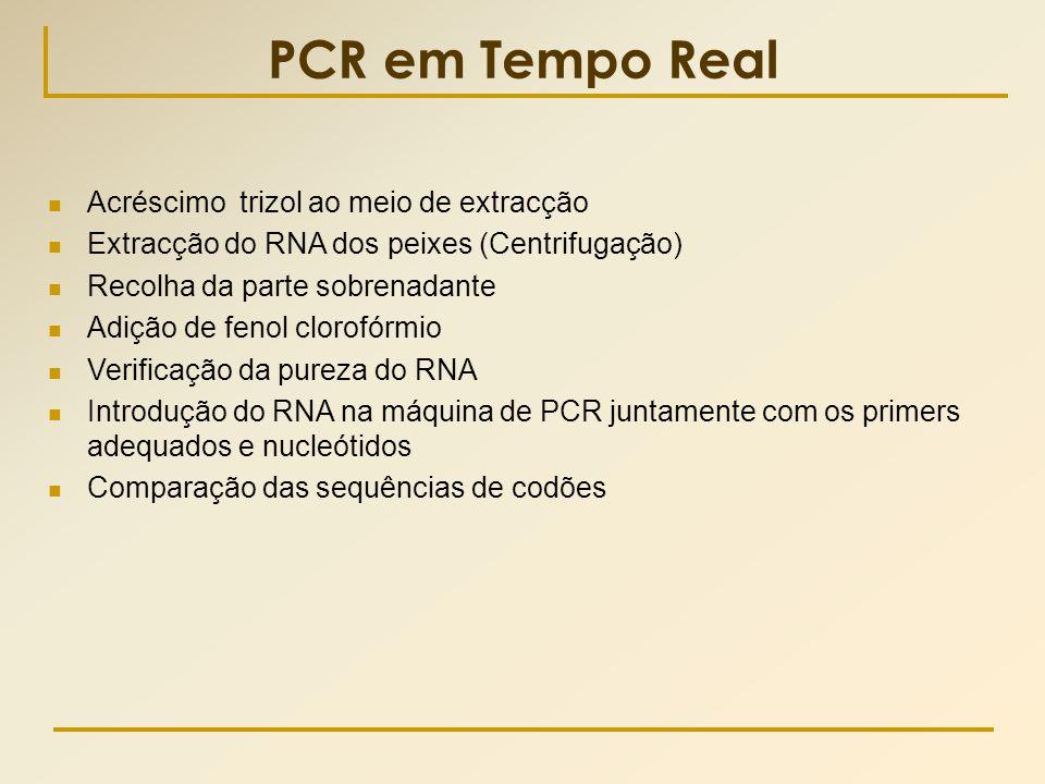 PCR em Tempo Real Acréscimo trizol ao meio de extracção