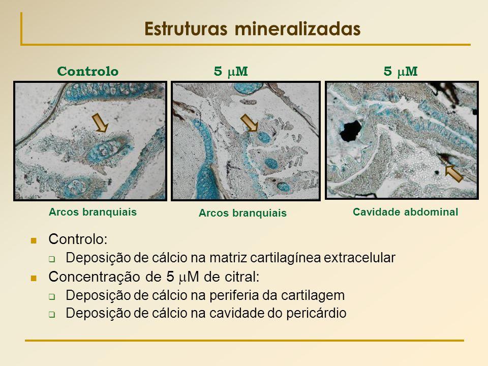 Estruturas mineralizadas