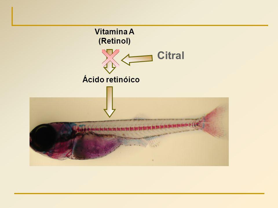 Vitamina A (Retinol) Citral Ácido retinóico