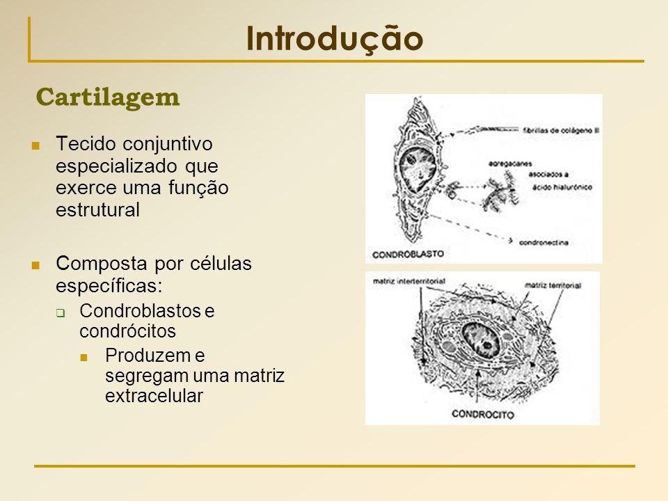 Introdução Cartilagem