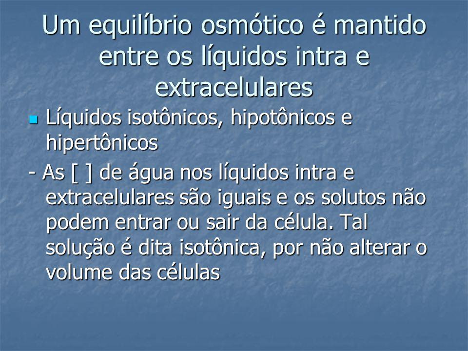 Um equilíbrio osmótico é mantido entre os líquidos intra e extracelulares