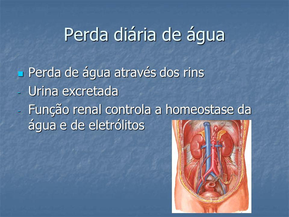 Perda diária de água Perda de água através dos rins Urina excretada