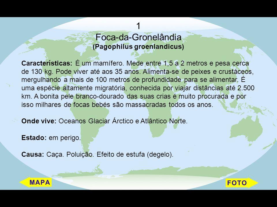 (Pagophilus groenlandicus)