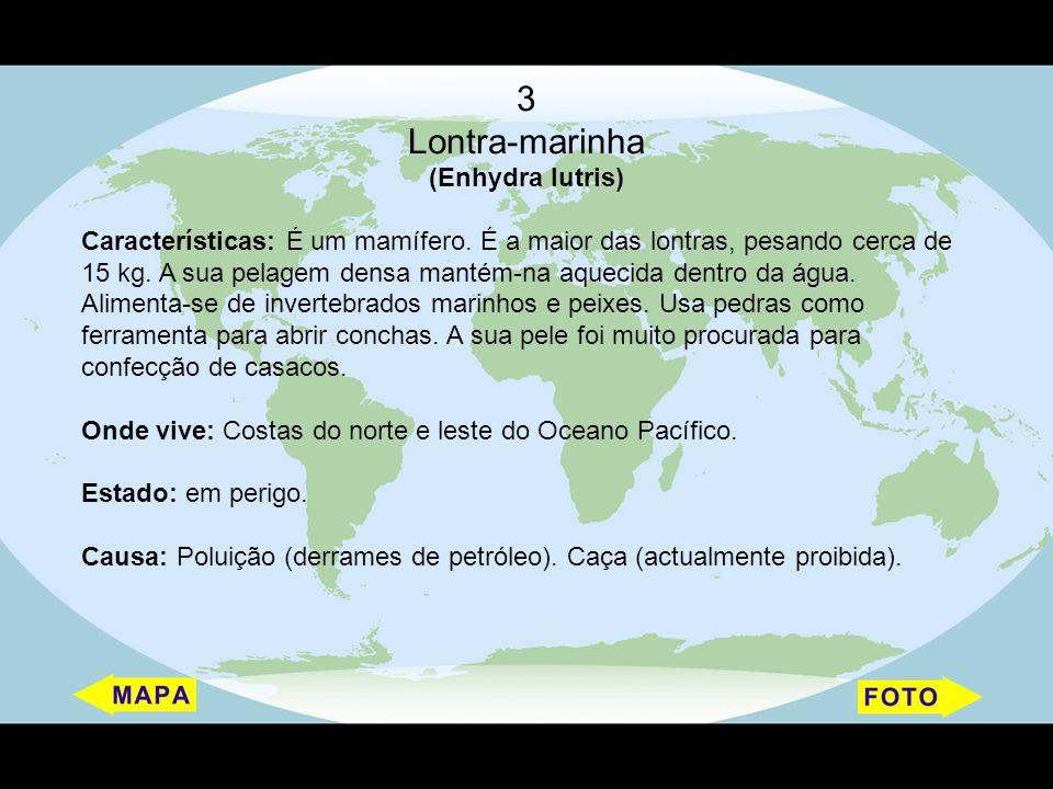 3 Lontra-marinha (Enhydra lutris)