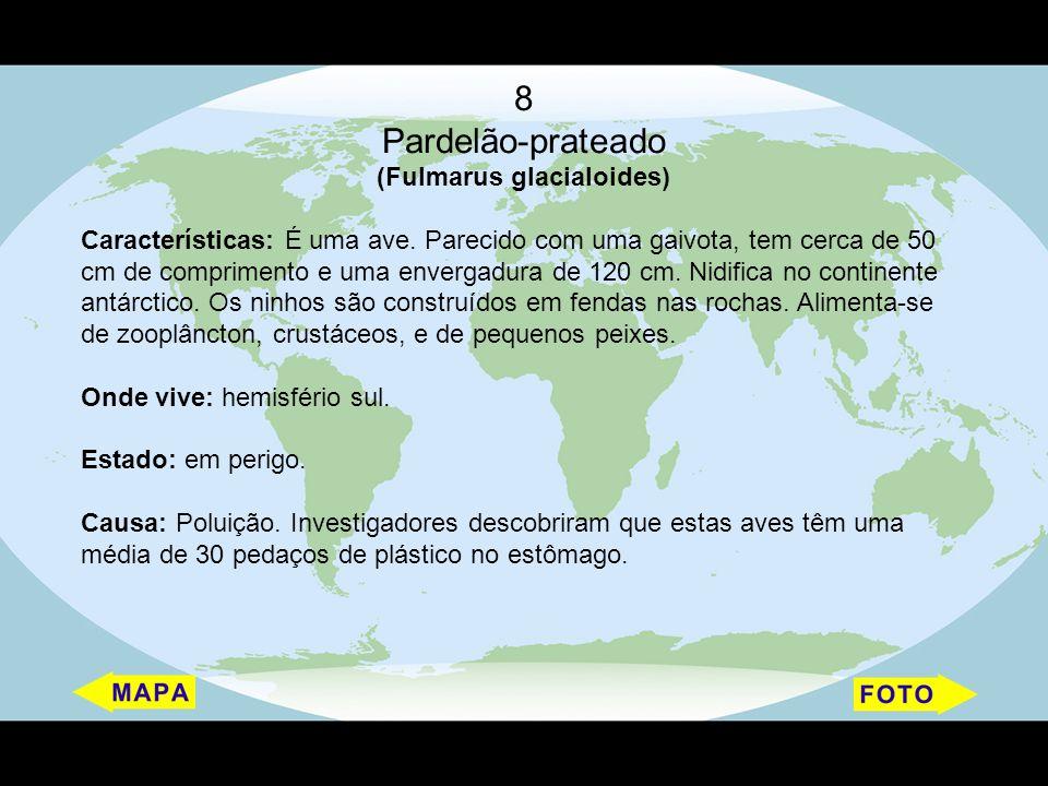 (Fulmarus glacialoides)
