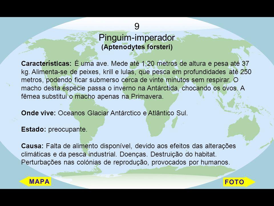 (Aptenodytes forsteri)