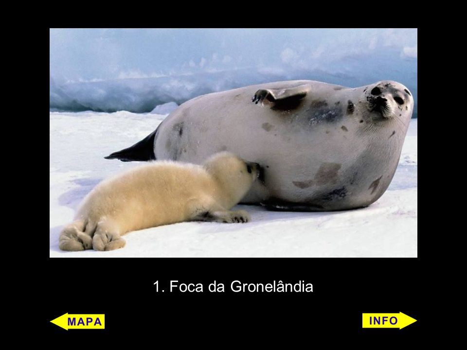 1. Foca da Gronelândia