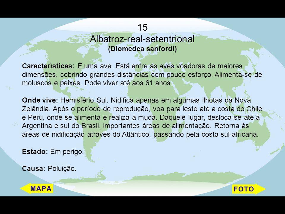 Albatroz-real-setentrional