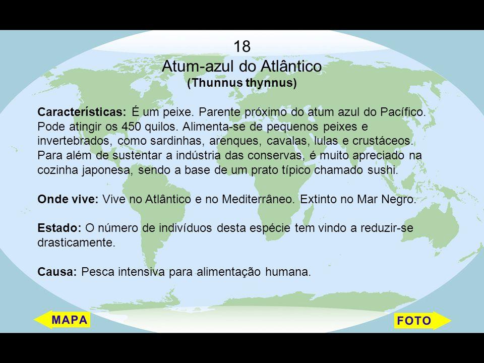 Atum-azul do Atlântico