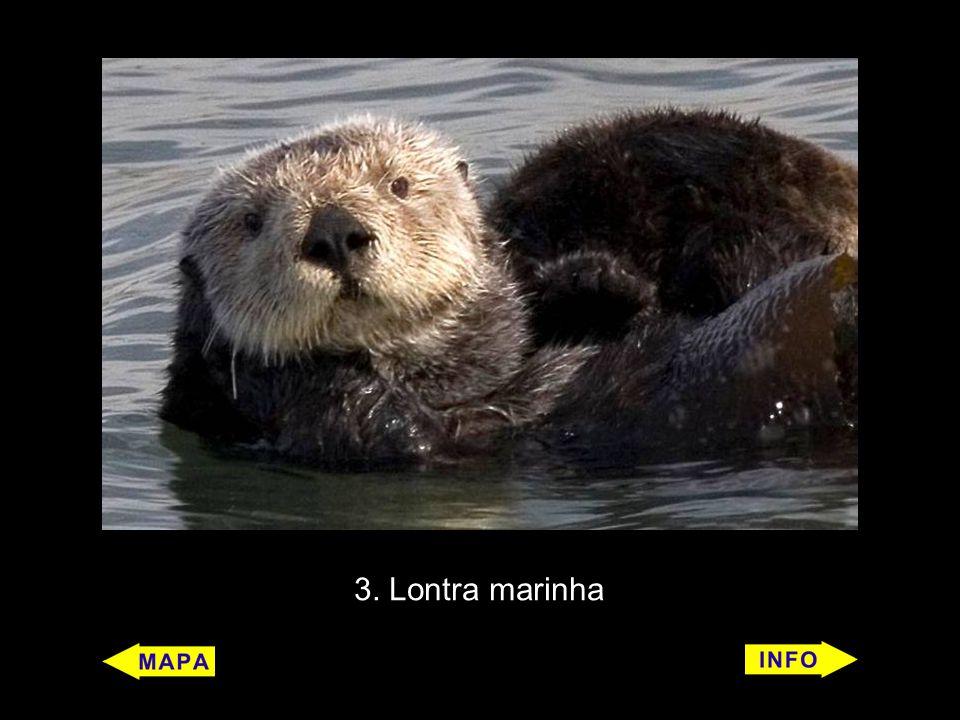 3. Lontra marinha