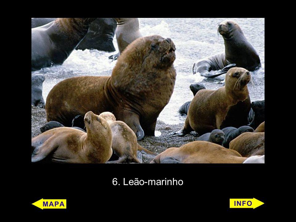 6. Leão-marinho