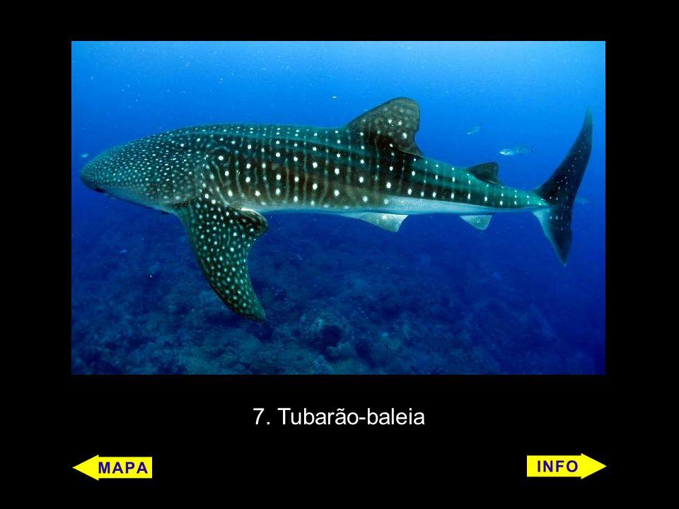 7. Tubarão-baleia