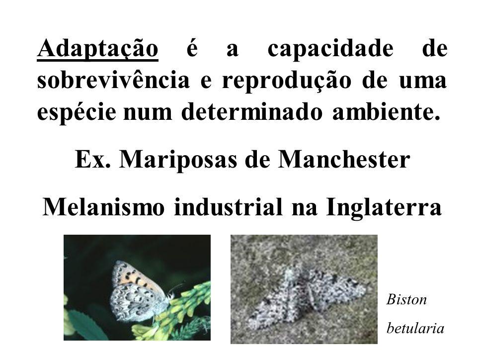 Ex. Mariposas de Manchester Melanismo industrial na Inglaterra