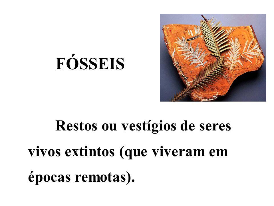 FÓSSEIS Restos ou vestígios de seres vivos extintos (que viveram em épocas remotas).