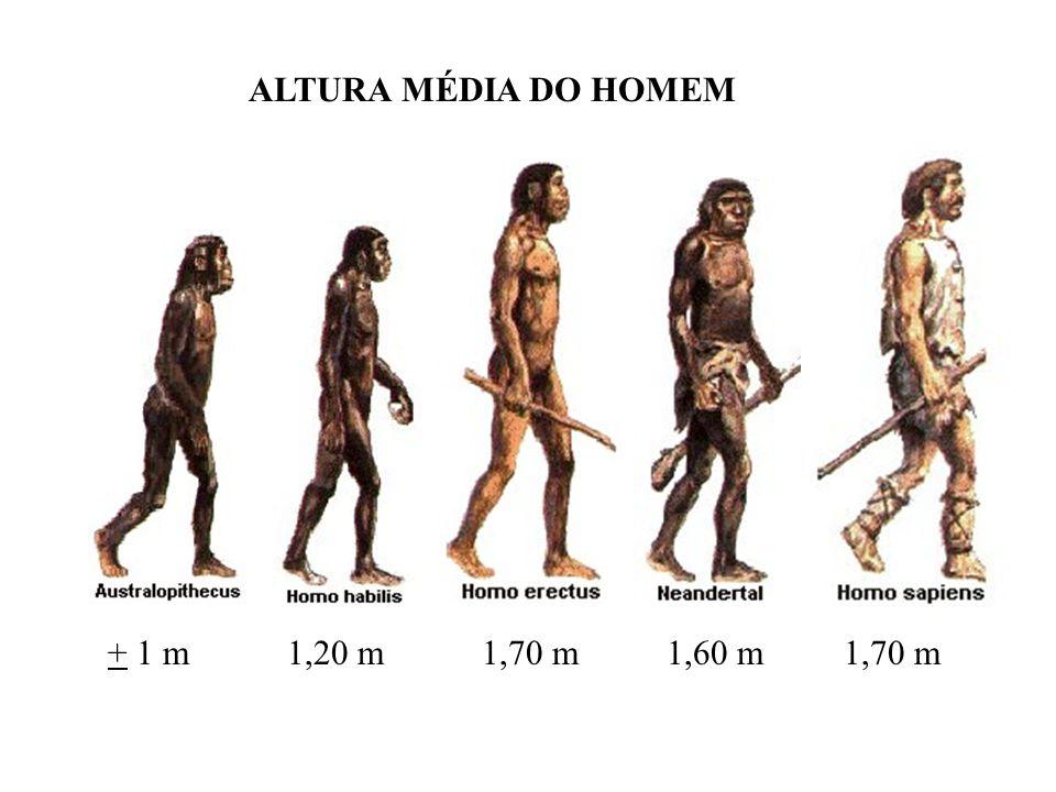 ALTURA MÉDIA DO HOMEM + 1 m 1,20 m 1,70 m 1,60 m 1,70 m