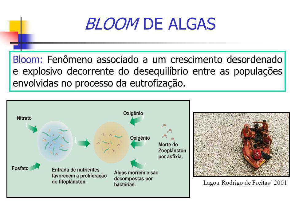 BLOOM DE ALGAS