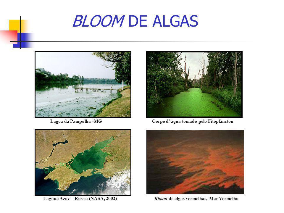 BLOOM DE ALGAS Lagoa da Pampulha -MG