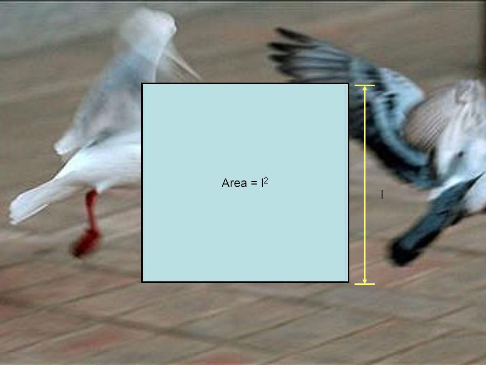 Area = l2 l