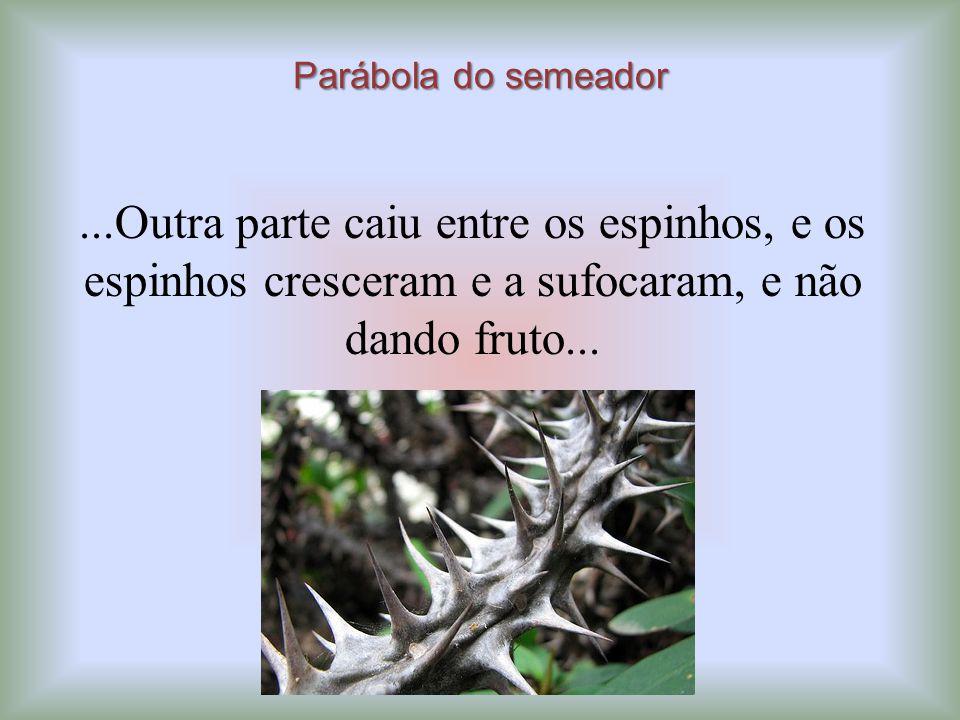 Parábola do semeador ...Outra parte caiu entre os espinhos, e os espinhos cresceram e a sufocaram, e não dando fruto...