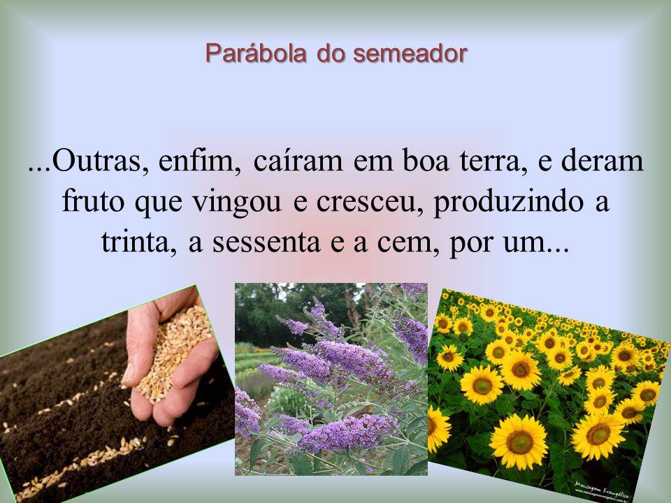 Parábola do semeador ...Outras, enfim, caíram em boa terra, e deram fruto que vingou e cresceu, produzindo a trinta, a sessenta e a cem, por um...