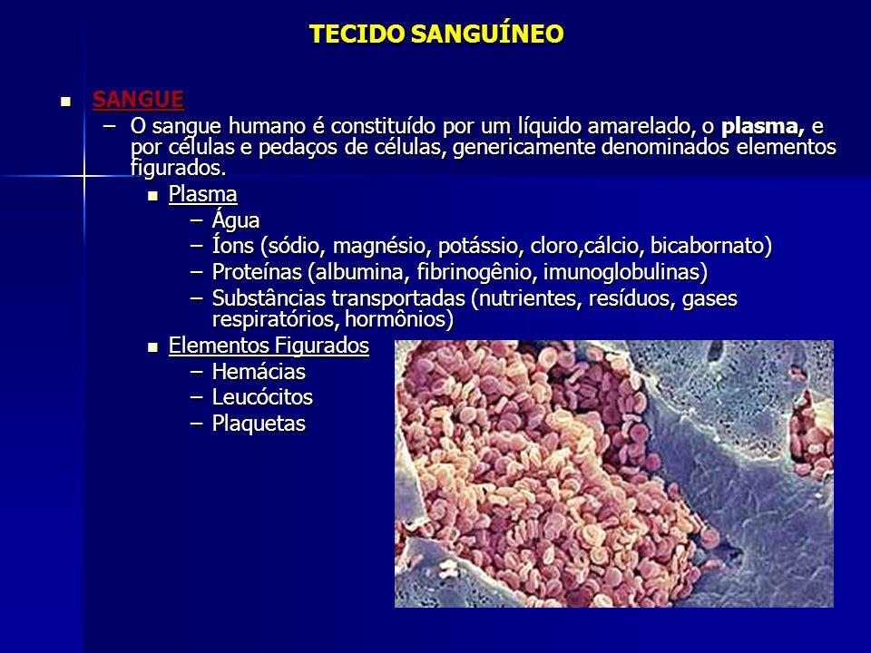 TECIDO SANGUÍNEO SANGUE